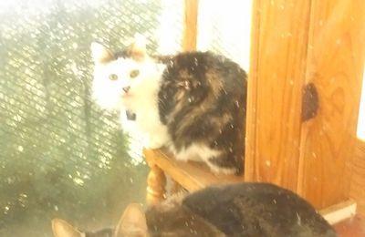 Tremplin et escalier pour chats