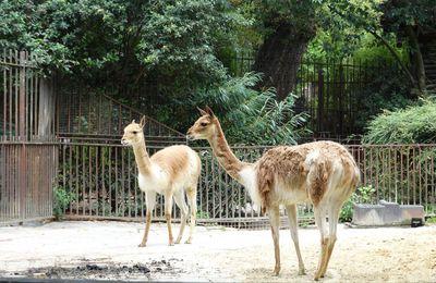 Paris, La Ménagerie Zoo du Jardin des Plantes