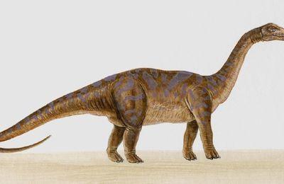 étude du son O -  dinosaures