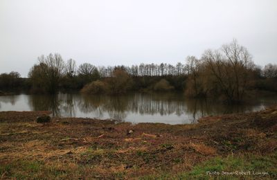 Pluie d'hiver sur le Marais de Saône
