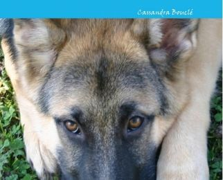 « L'été d'un chien » de Cassandra Bouclé — Bookless Éditions