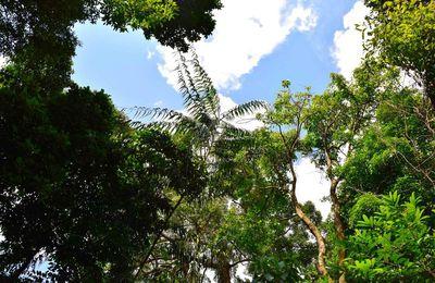 Garden Botanic - Singapore