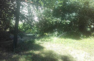 Un banc , un arbre un jet d'eau et rien d'autre