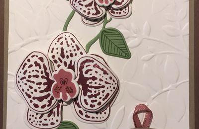 De jolies orchidées...