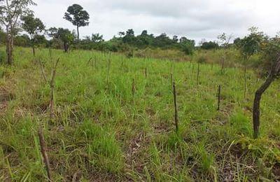 RESTAURATION DE L'ECOSYSTEME : DES PLANTES POUR LA NATURE ET POUR LA VIE
