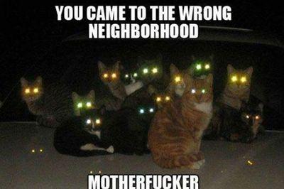 Attention... ils se préparent dans l'ombre...