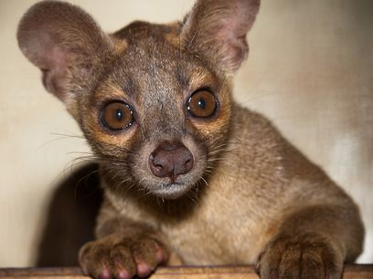 auteur photo : Stephanie Adams/Houston Zoo