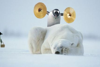 Un pingouin sûr de lui