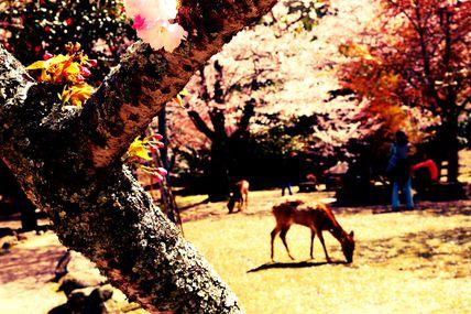 Travelling to Nara - April 2013 (Part 1)