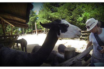 Parc Zoologique d'Amnéville 2015