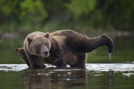 Les photographes du Lac Kourile. Sergey Ivanov