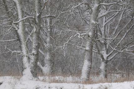 Bon matin de la forêt de Briansk