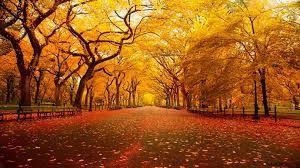 C'est l'automne !!