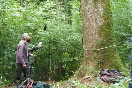 La conservation des arbres remarquables