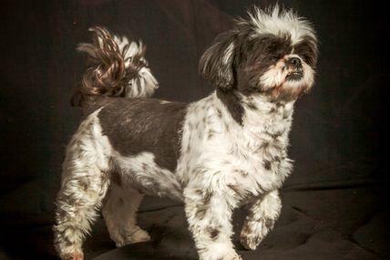30 mars - deux chiens de la même portée en studio