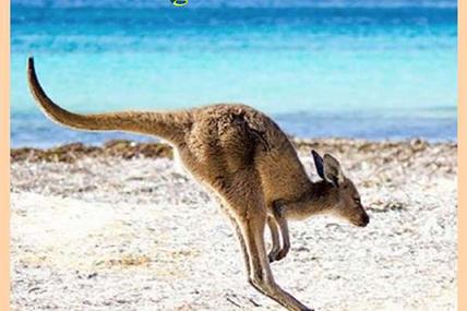 L'île kangourou