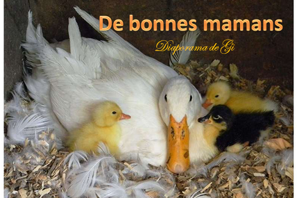 De bonnes mamans