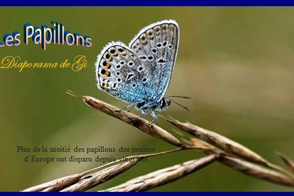 Les Papillons N°2
