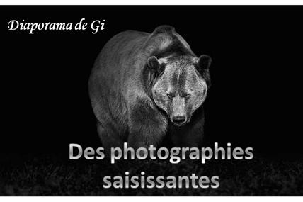 Des photographies saisissantes