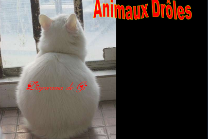 Animaux drôles