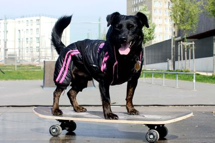 Tibou fait du skate