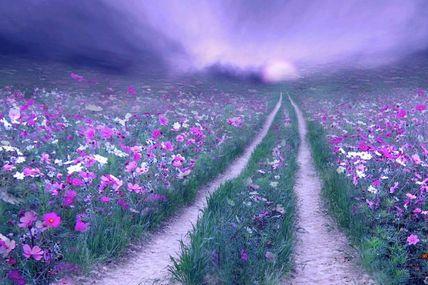 Povestea florilor minunate ale Maicii Domnului / Povestiri pentru Clasa Pregatitoare
