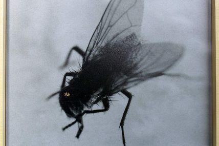 """Dernier jour à la Combe """"Le microbe de la mouche"""""""