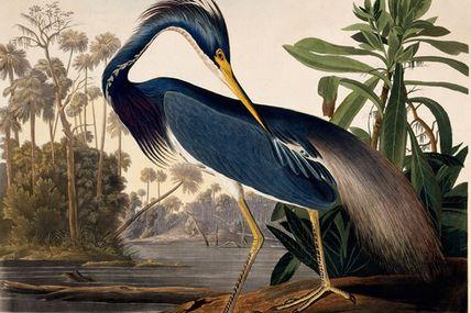 XVIIe-XVIIIe. Des Bretons en Louisiane