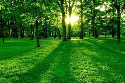 10 guías practicas: Ansiedad y Relajación