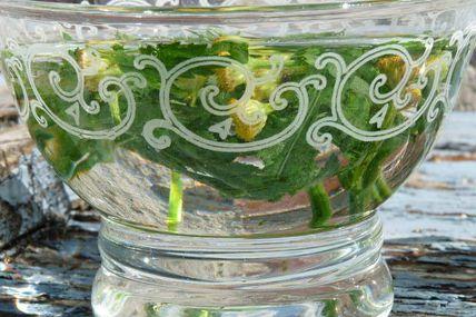 Comment fabriquer ses élixirs de fleurs