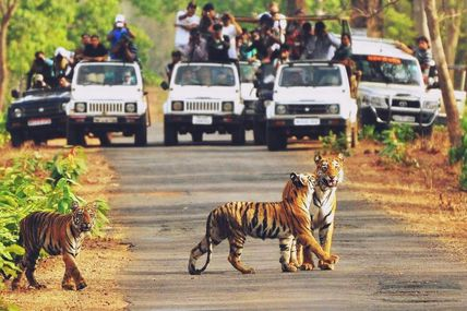 Enjoy Jeep Safari at Rajaji National Park in Rishikesh.