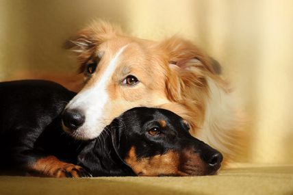 The Power of Absent Healing For Animals