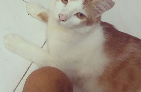 CARTUDAY: Renji and His Egg a.k.a Singo Pear