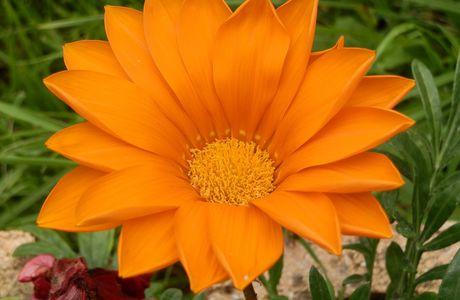 une fleur dans mon jardin