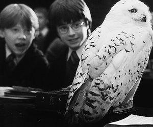 TAG : Hogwarts
