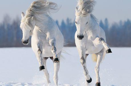 Mon top 10 de photos de chevaux