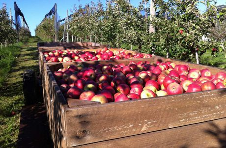 APPLE PICKING + Donnely River + Perth et Fremantle