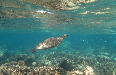 NINGALOO REEF - Coral Bay et Exmouth