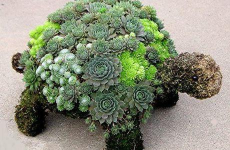 Les succulentes