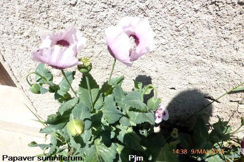 Vebre09marseille histoire fleursetgraindesel - Gaston ouvrard je ne suis pas bien portant ...