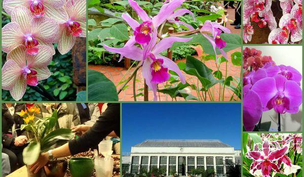 Jardins fleurs vivre autrement vos loisirs avec clodelle - Maison jardin des plantes nantes orleans ...