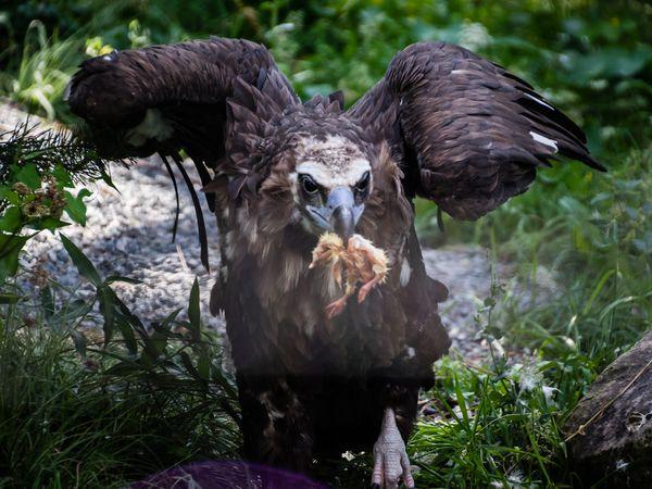 Les vautours étaient en plein repas :)