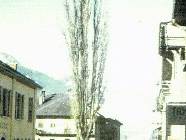 Le Grand peuplier d'Aigueblanche