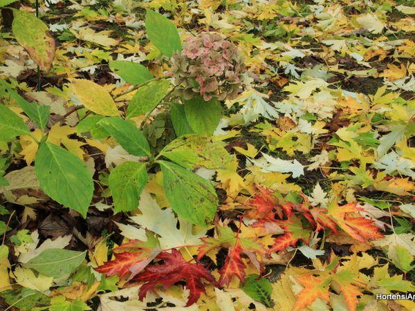 pensez à ramasser et stocker les feuilles, pour un futur paillage !