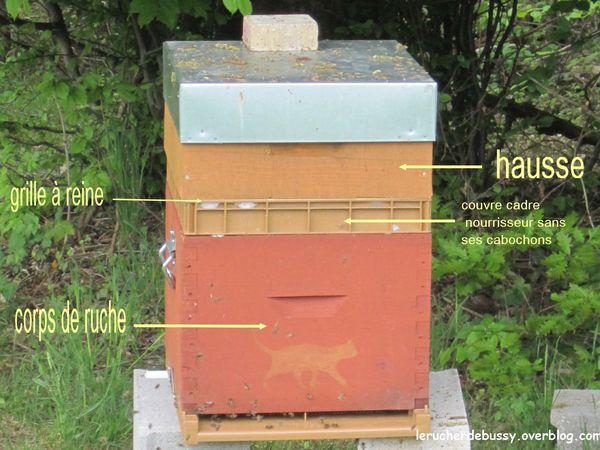 une des deux ruches ayant une hausse