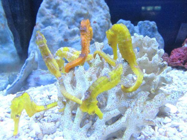 Des aquariums qui nous rappellent les poissons tropicaux de la Réunion