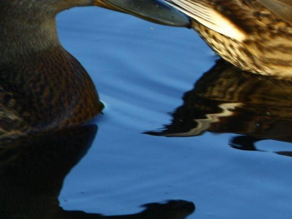 Les oiseaux marins de bon matin