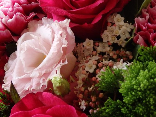 Quelques fleurs en partage