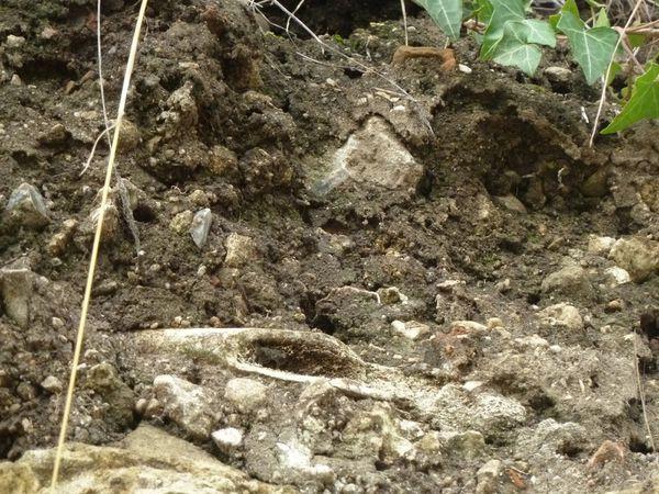 Dans ce secteur, un ancien vignoble, des dizaines de squelettes avaient été exhumés par les archéologues.