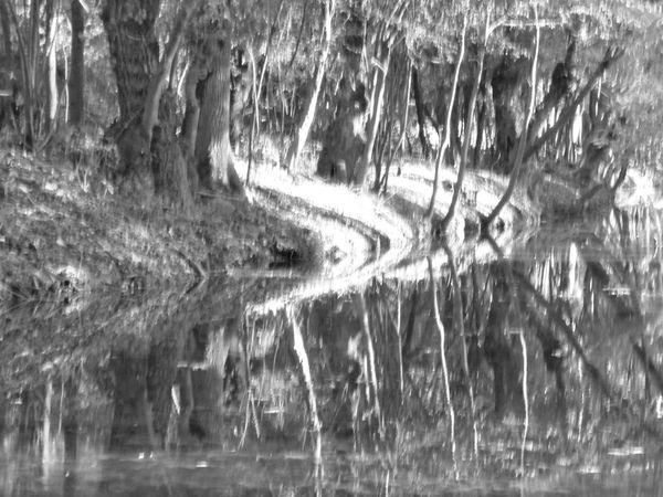 Au cœur des marais des Gonds à quelques kilomètres au sud de Saintes...... Après ces quelques regards qui nous interpellent... avant de parler de la terrible tempête de 1999 voici les faibles vestiges d'un moulin dans ce secteur de la Seugne.  On y découvre, outre un cours d'eau qui ne demande encore qu'à faire tourner les meules, mais surtout les quelques vestiges, des ruines que la nature a colonisées, remises en sous-sol....